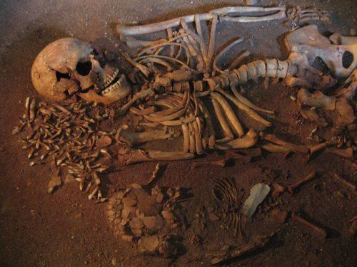 Banet på Svanevingen. Vedbækfundene © Rudersdal Museum