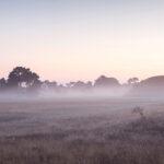 Sutton-Hoo-on a frosty morning in winter