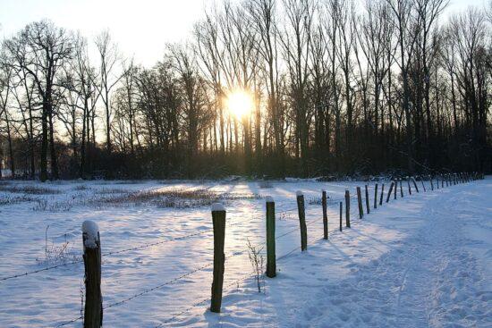 Vinterlandskab med hegn. En af vinterens opgaver var at sætte hegnene i stand. Foto: Public Domain