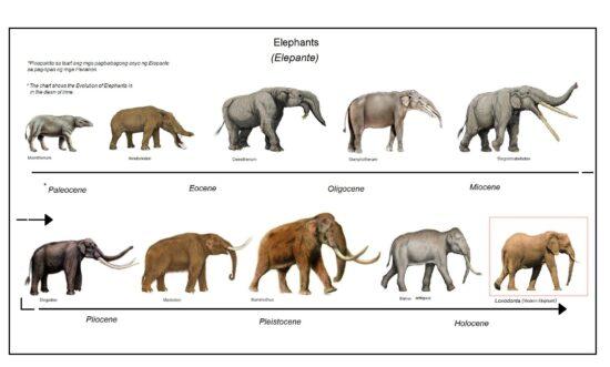 Elefanters udviklingshistorie